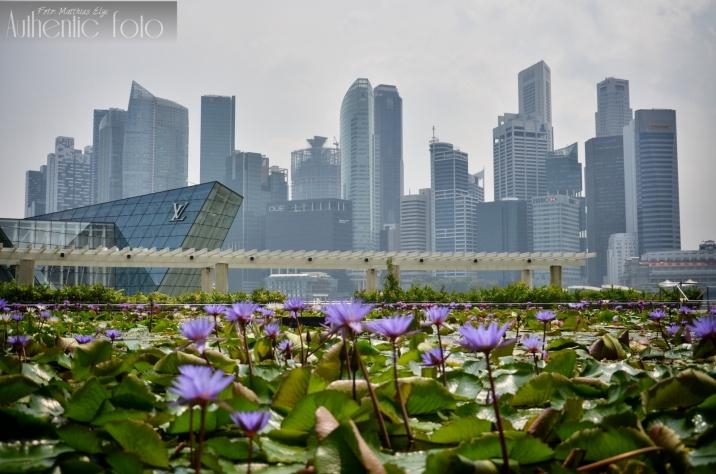Urban gardens Singapore