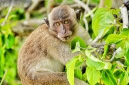 """Koh Phi Lee Monkey Beach """"Augenblick """""""
